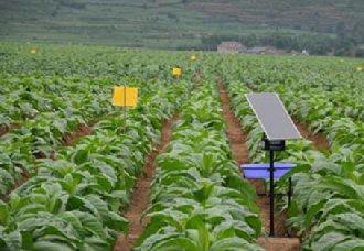 甘肃张掖市实施农业绿色防控技术