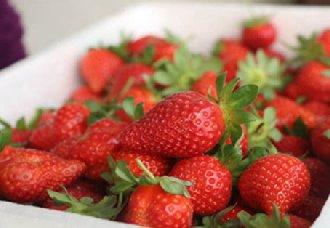 <b>日本培育出草莓新产品 每颗售价折合人民币为600元</b>