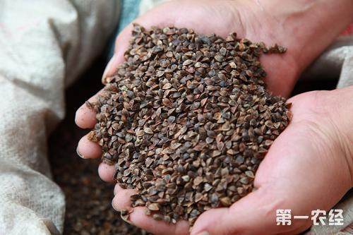 山东2018年种子经销商规范化经营培训班在泰安顺利举办