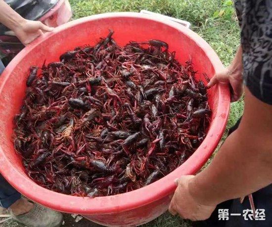 最近一周全国各地小龙虾市场价格行情