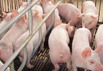 猪背肌坏疽是怎么产生的?有哪些症状?