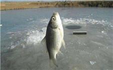 冬季导致鱼类死亡的原因有哪些?如何进行预防
