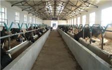 秋冬季节奶牛养殖注意事项
