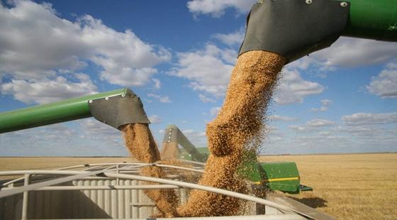 农村粮食补贴要怎么查询?用12316要怎么查询?