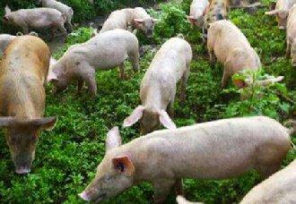 <b>未来10年养猪业将会经历什么巨变?</b>