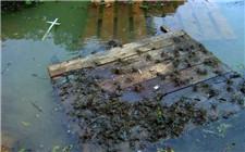 河蟹养殖后期管理技术 如何增加河蟹重量