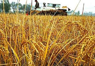 2019年水稻种植者补贴仍在实行 变的只是补贴金额与补贴方式