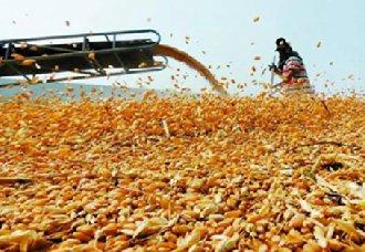 山东德州:进行粮食生产大市向粮食产业强市转化