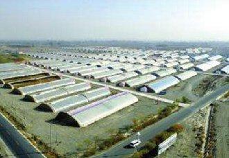 酒泉总寨:戈壁变粮仓,几百个温室里绿意盎然
