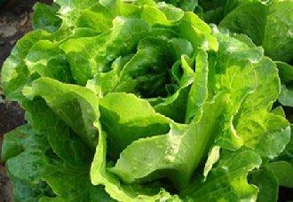 <b>美国南加州一农场召回生菜与菜花 被认定受到大肠杆菌的污染</b>