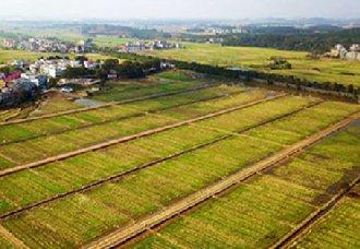 辽宁:大力推进农村土地综合整治 建成高标准农田1352万亩