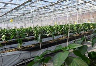 山东高青县农业与科技相结合 提高农业种植效益