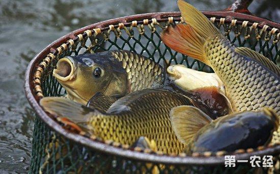 山东威海:12月淡水鱼回暖 贝类价格高位运行
