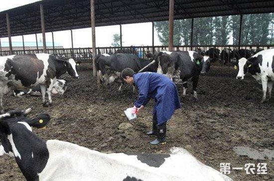 牛开始育肥前如何进行消毒和驱虫