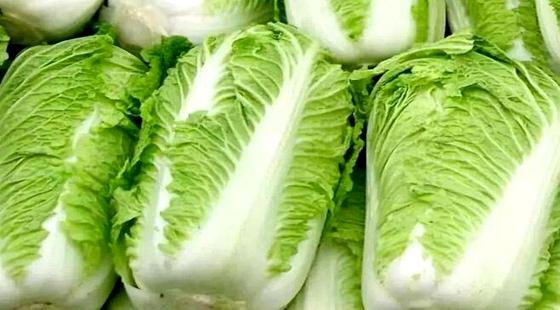 """青岛胶州菜农投保""""大白菜价格指数保险"""" 每亩可获得1022元"""