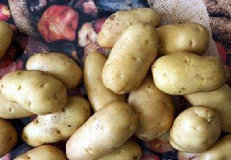 "<b>""希森6号""马铃薯仅用两年时间获得哈萨克斯坦的官方认证</b>"