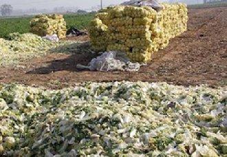 山东沣水镇首次出现白菜萝卜大量滞销的情况 广大菜农求助