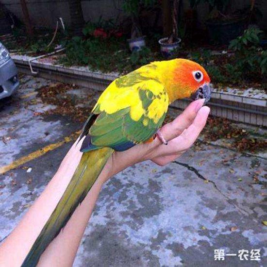 观赏鸟饲养:什么鸟放飞出去还能自己回来?