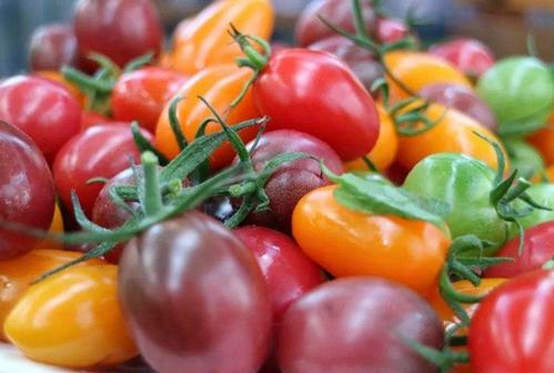 特色新品种种植鼓起了农民的钱袋子