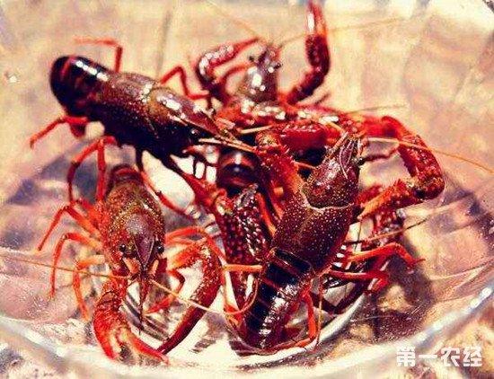 养殖小龙虾需要怎样的环境?小龙虾养殖环境介绍