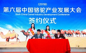 <b>第六届中国骆驼产业发展大会暨首届中国骆驼文化节</b>