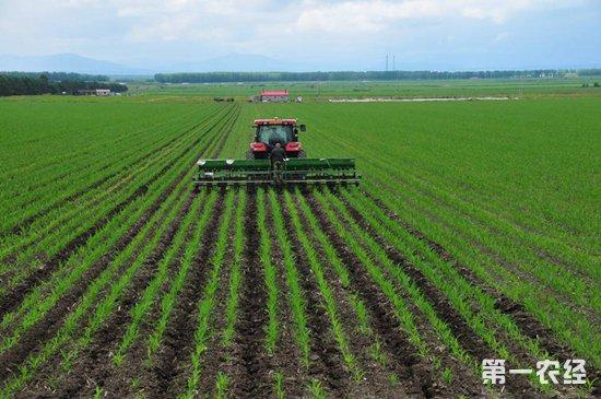 """植物均衡营养肥为作物""""减肥""""增效"""