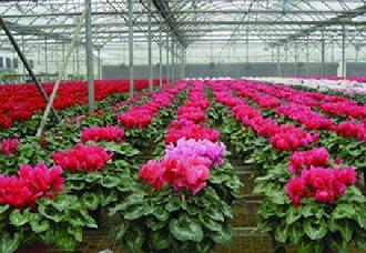 2018年前三季度云南花卉总产值达386亿元