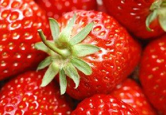 草莓连作障碍的症状及改善措施