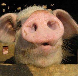 <b>年前生猪价格的走势还有没有盼头?</b>