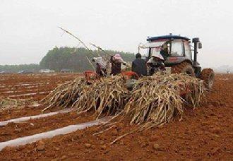 广东英德推广采用机械化种植甘蔗 每亩将有30元补贴