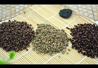 <b>彩色小麦获农业创新奖,为发展功能农业贡献了力量</b>