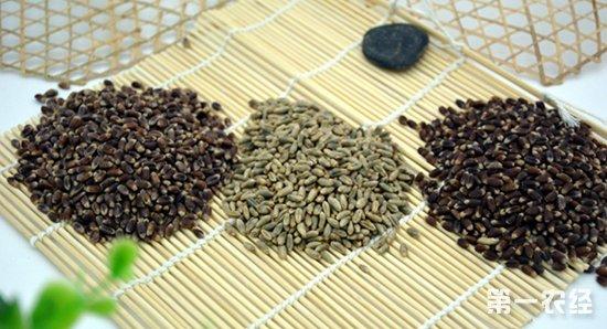 彩色小麦获农业创新奖,为发展功能农业贡献了力量