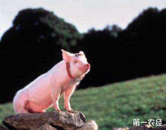 猪价上涨,4个省份突破了10元
