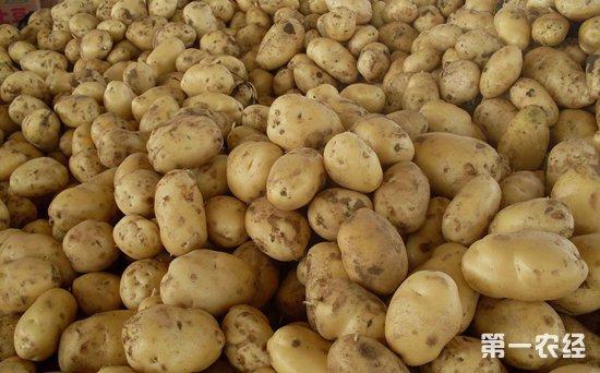 2018年12月29日国内马铃薯市场行情