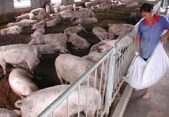 面对臭气熏天的猪圈,养殖户该如何面对?
