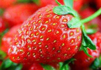 <b>上海浦东进行草莓农药残留监督抽查工作 确保草莓质量安全</b>