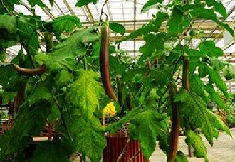 重庆实现绿色发展 带动乡村振兴