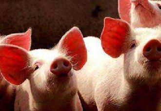 <b>4天两起非洲猪瘟,北方猪价遭受冲击</b>