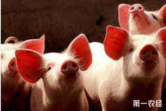 4天两起非洲猪瘟,北方猪价遭受冲击