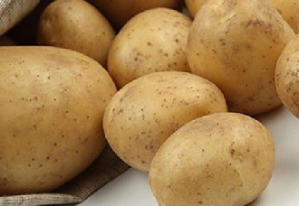 <b>美国批准允许3种转基因马铃薯在春季进行种植与秋季出售</b>