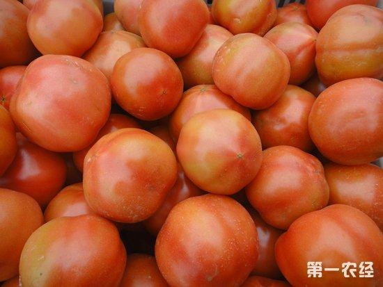 春节将至,国内西红柿价格一路攀升