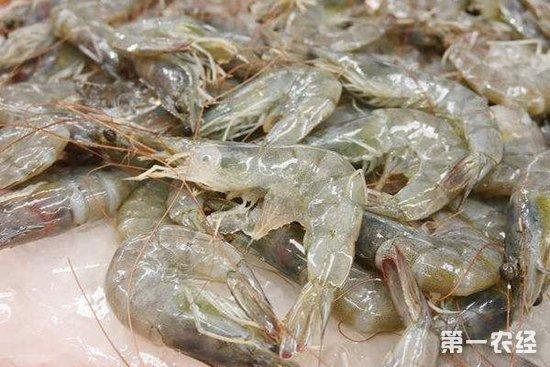 2019年,全球虾类贸易,中国将占主导地位!