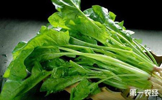 茎叶类蔬菜