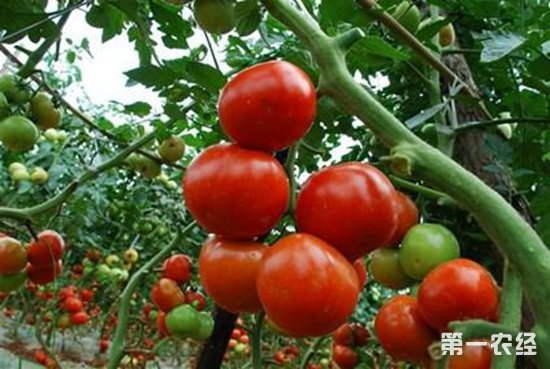 哪些植物比较耐旱?七种耐旱植物介绍