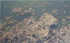 水产养殖水质改善:泥皮的处理方法