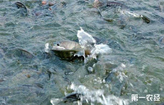 养鱼时如何减少鱼类生病的情况?鱼的疾病防控方法