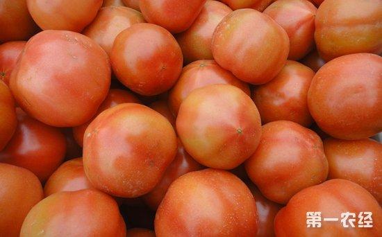 西红柿价格上涨空间有限 种植户扩张要谨慎