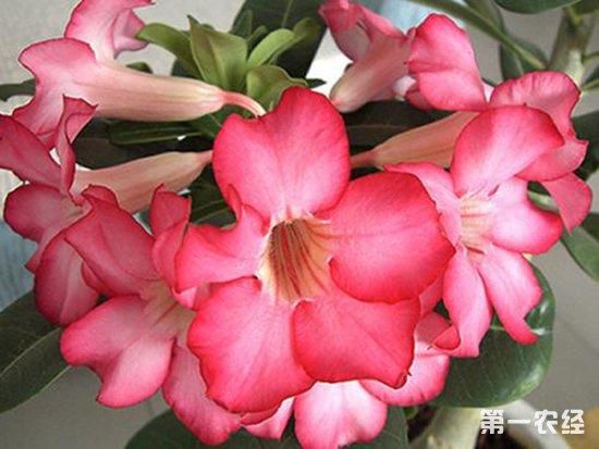 家庭养花:哪些植物比较耐旱?