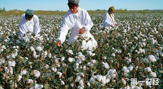 中美贸易谈判前景向好 棉价有望振荡上行