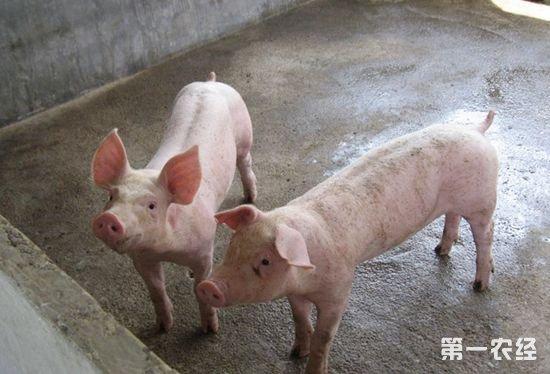 猪亚硝酸盐中毒的症状以及防治措施